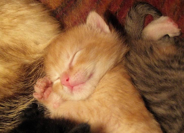 (с) Daily Kitten